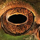 Treefrog eye by jimmy hoffman