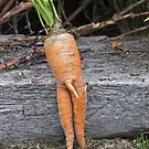 Mr Carrot! by Sherie Howard
