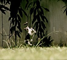 Reality Tom & Jerry by withsun