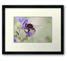 Bumbling Bee Framed Print