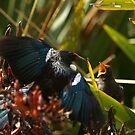 feeding tui three by joergilmaz