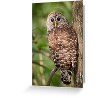 Barred Owl on a Saturday morning in August Greeting Card