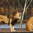 Lions Talk by Jo Nijenhuis
