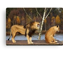 Lions Talk Canvas Print