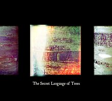 Cambridge Collection: The Secret Language of Trees by Sybille Sterk