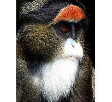 De Brazza's Monkey Photographic Print