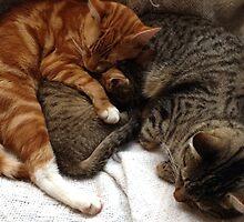 Leo, Freddie & Timone by lillieemilie