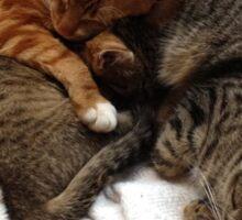 Leo, Freddie & Timone Sticker