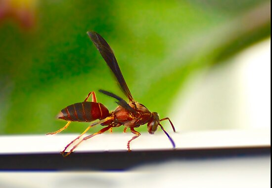 Wasp on the ledge by imagetj