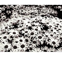 Flowers at Night Photographic Print