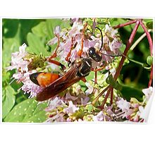 Giant Red Wasp Poster