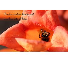 Practice Random Beauty and Senseless Acts of Love Photographic Print