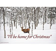 I'll be home for Christmas - Red Deer Photographic Print