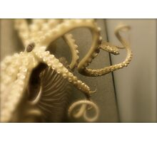 Octopus Photographic Print