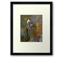 I've Got My Eyes on You Framed Print