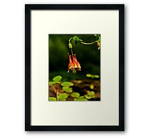 Seen In the Woods Framed Print