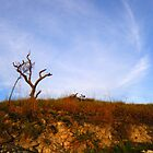 Roraima tree by dalsan