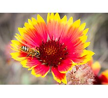 Bee Bright and Busy Photographic Print