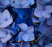 Blue Bear plays Hide and Seek. by Kerry McQuaid