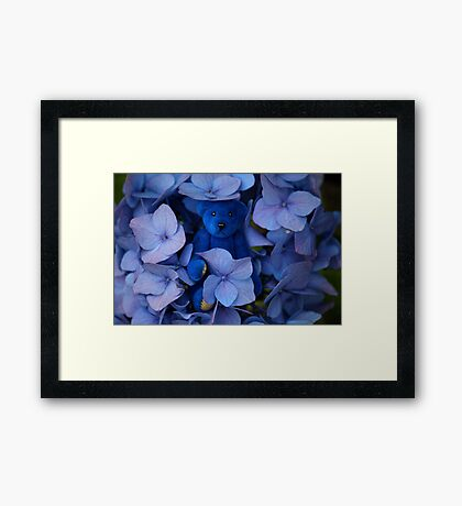Blue Bear plays Hide and Seek. Framed Print