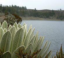 Mucubaji lake by dalsan
