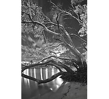 moonlit night at Kangaroo Point  Photographic Print