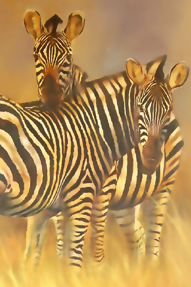 Common or Plains Zebra (Equus burchelli) by Terry Bailey