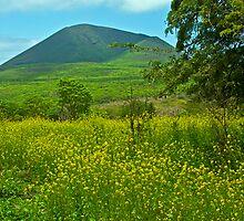 Floreana, Galapagos by bulljup