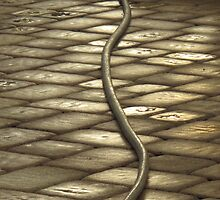 A snake? Or a garden hose? by TedT