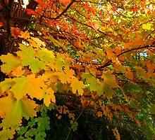 Autumn park by iPostnikov
