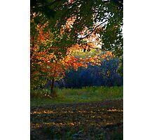 Autumn park Photographic Print