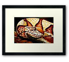 Copperhead (Agkistrodon contrortrix) Framed Print