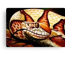 Copperhead (Agkistrodon contrortrix) Canvas Print