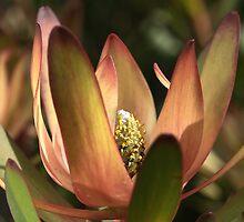 Protea by Joy Watson
