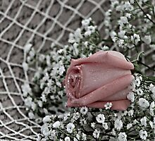 My Words For You are Tied Up in a Web by Sherry Hallemeier