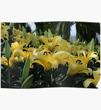 Lilies, Lilies Everywhere Poster