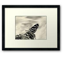 Zebra Wing in Sepia Framed Print