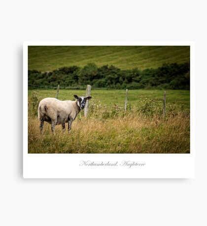 Northumberland countryside Canvas Print