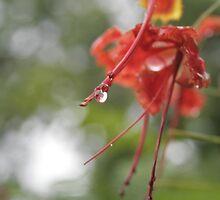 Nagpur in Rains by Prem Pawar