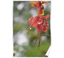 Nagpur in Rains Poster