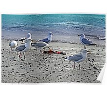 Seagulls Play Poster