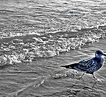 Irridescent Seagull Running In the Surf by Jane Neill-Hancock