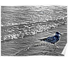 Irridescent Seagull Running In the Surf Poster