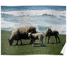 South Devon Coast Gara Rock Sheep And Two Lambs Grazeing With Wild Sea Spring 2011 Poster