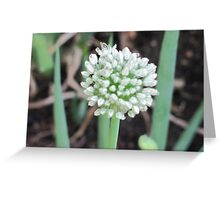 Chive plant ... Greeting Card