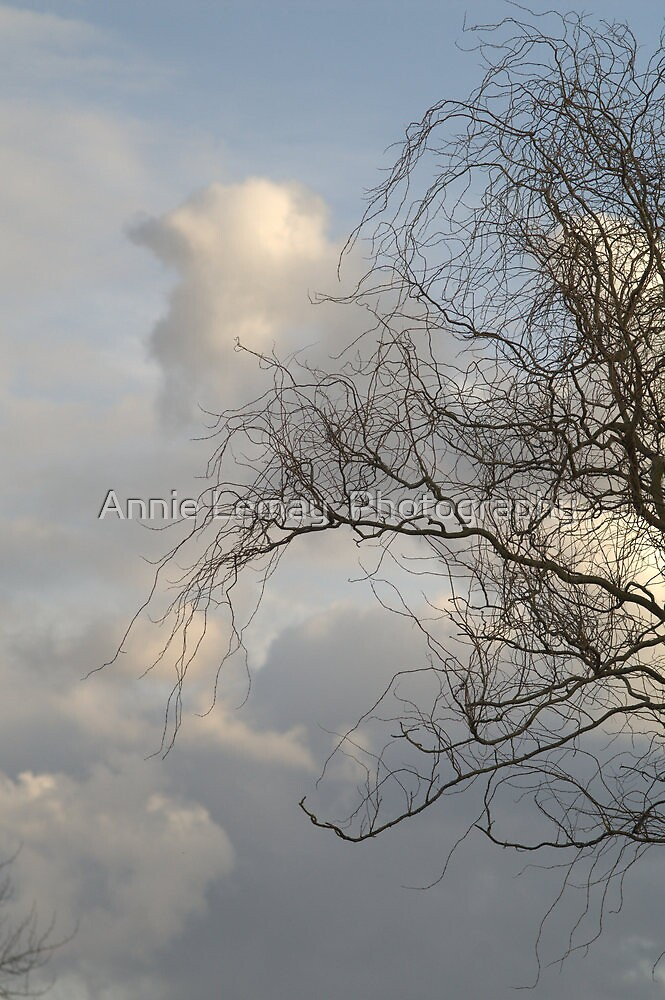 Curly Wllow by Annie Lemay  Photography