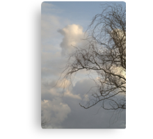 Curly Wllow Canvas Print