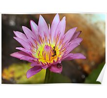 Bali Temple Water Lily Poster