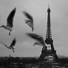 J'ai quelques photos d'oiseaux de Paris by Danica Radman