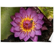 Bali Temple Water Lily 1 Poster
